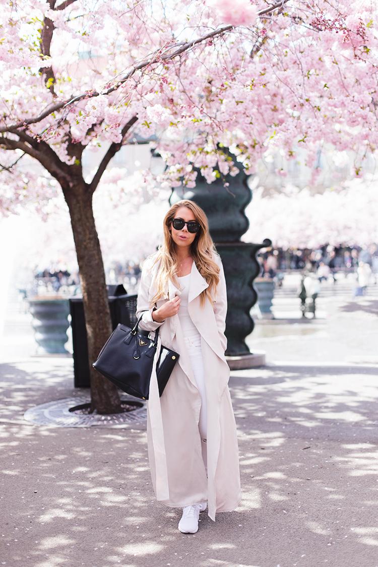 cherry-blossom-tree