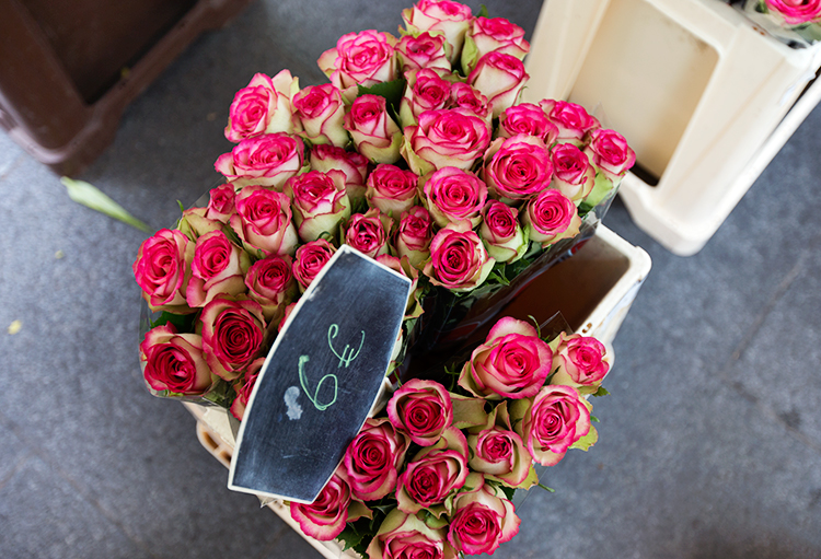 paris-roses