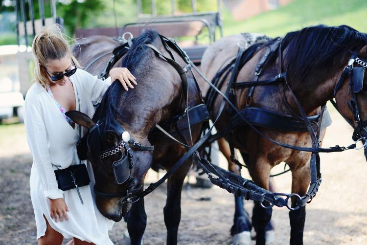 horse-cute-photo