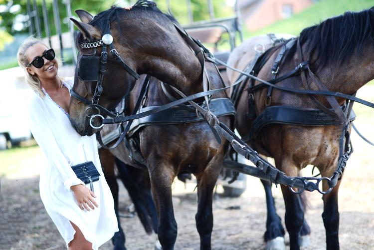 horse-cute-photo6