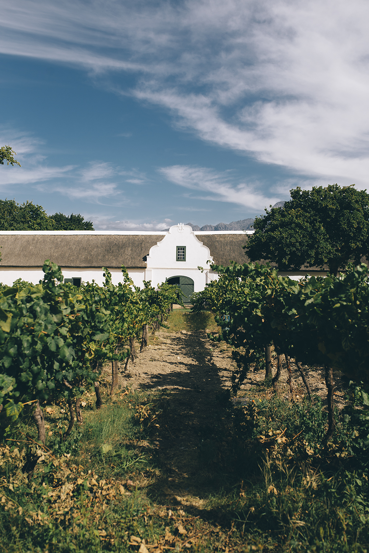 capetown_best_vineyards